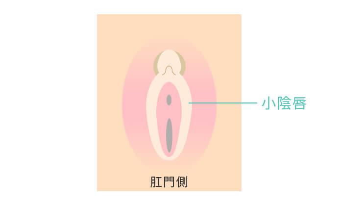小陰唇の縮小
